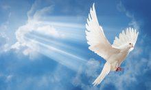 Quero paz