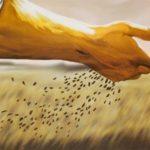 Ser cristão é ser semeador!